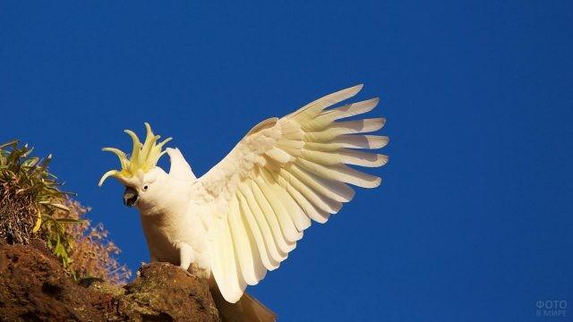Попугай сидит, расправив крылья