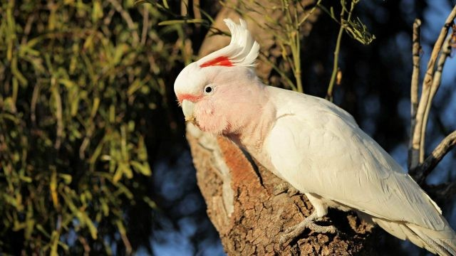 Розовый попугай стоит на дереве