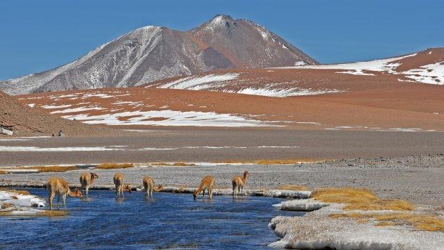 Дикие животные на водопое вблизи горных хребтов