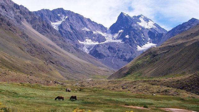 Лошади пасутся в долине у Анд