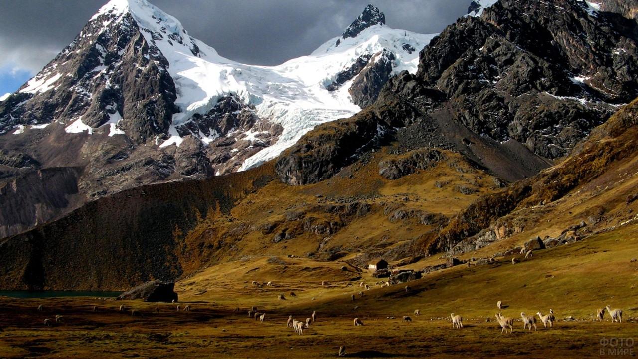 Животные пасутся на равнине вблизи высоких гор