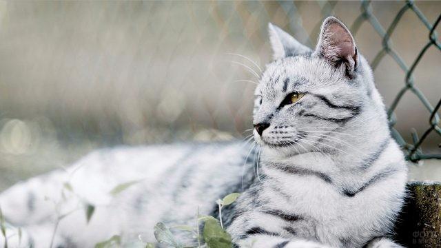 Кошка облокотилась на сетку-рабицу