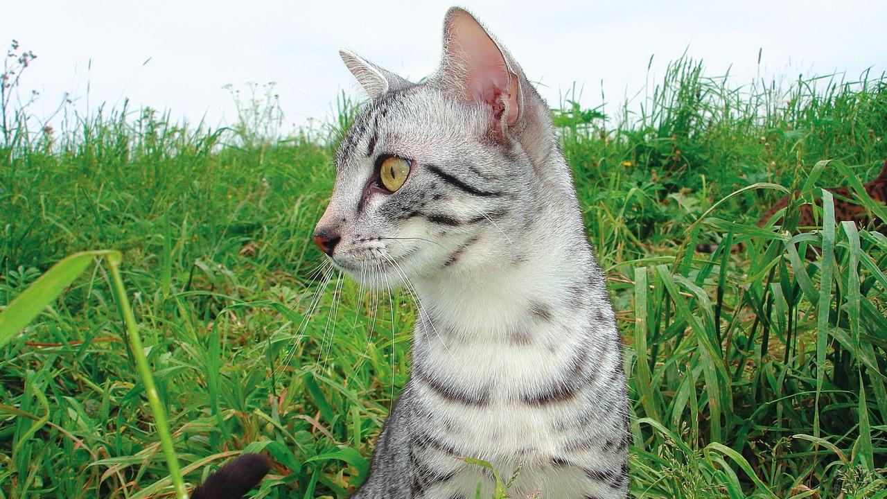 Кошка в траве смотрит в сторону