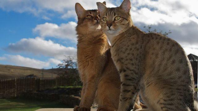 Кошки египетской мау на природе