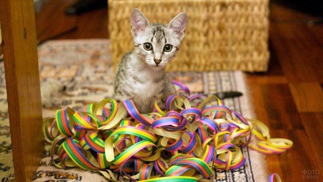 Котёнок в разноцветном серпантине