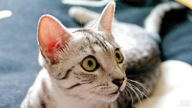 Молодая кошка смотрит в сторону