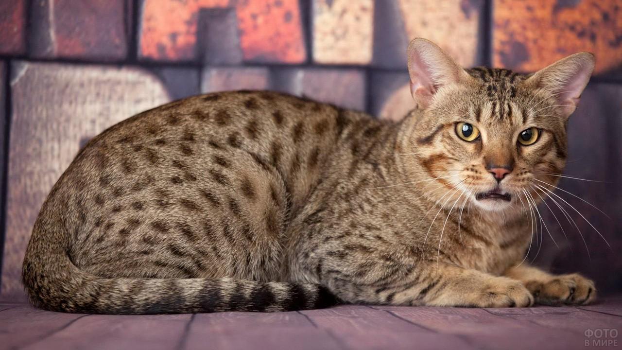 Пятнистый кот приоткрыл пасть