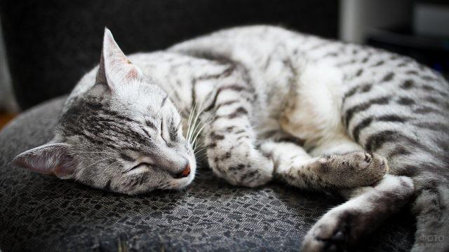 Полосатая кошка сладко спит