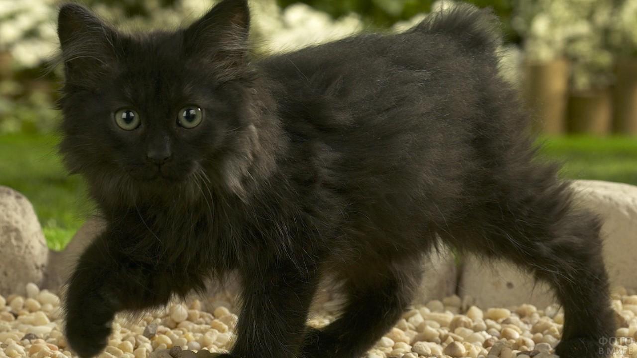 Чёрный котёнок на камешках