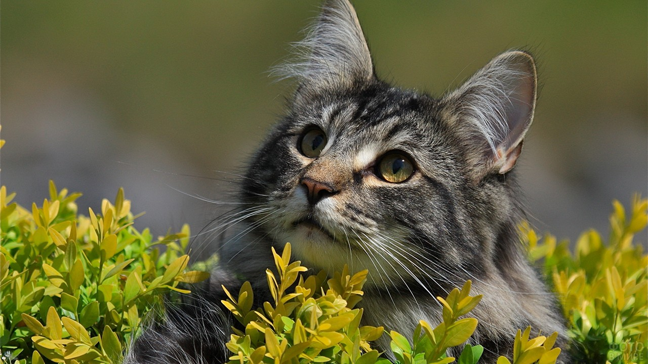 Кошка смотрит вверх в зарослях
