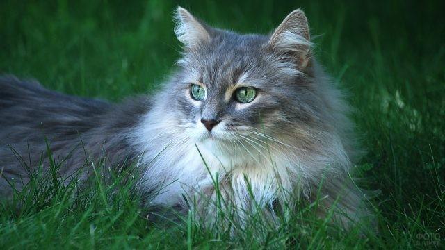 Серая кошка в траве