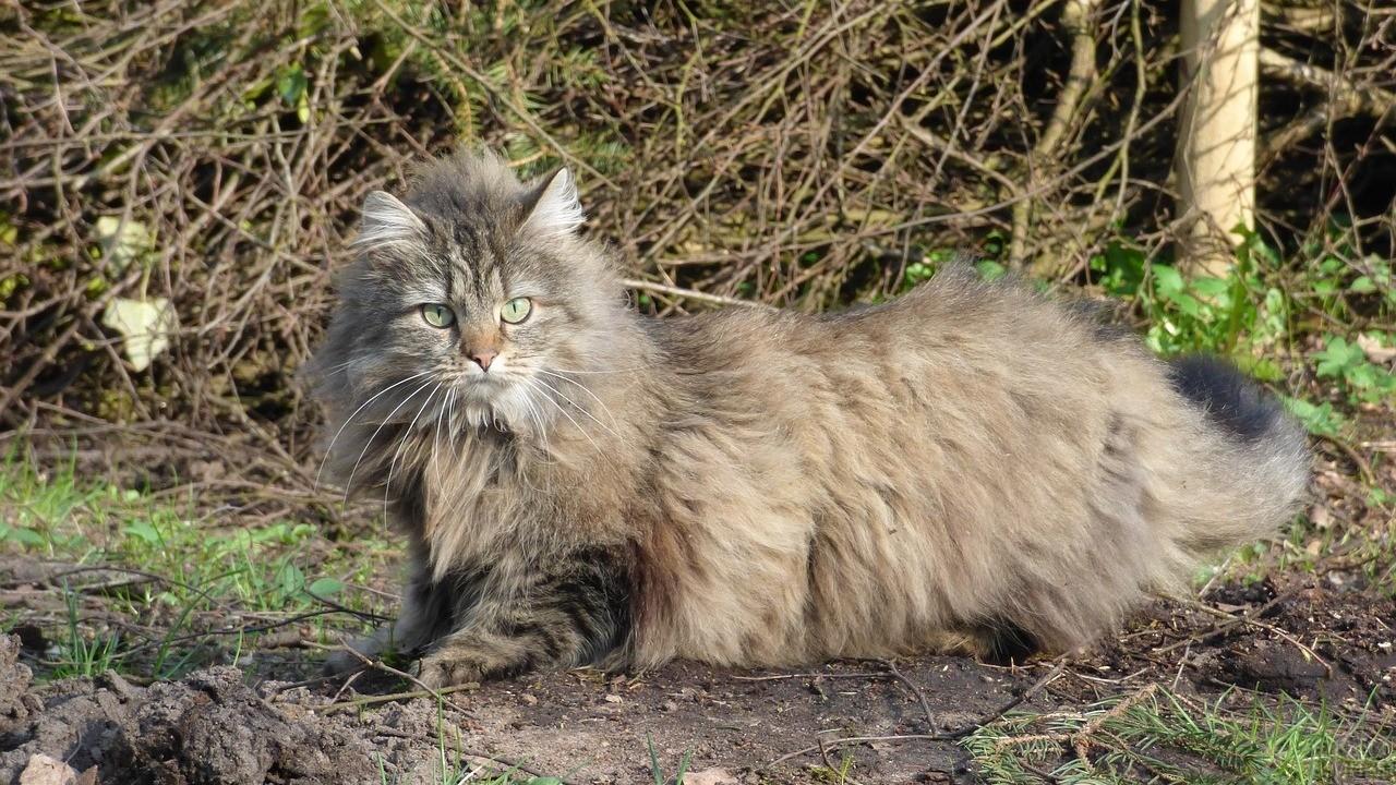 Свободная кошка на фоне веток