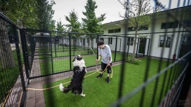 Азиат играет с собакой на ограждённой площадке