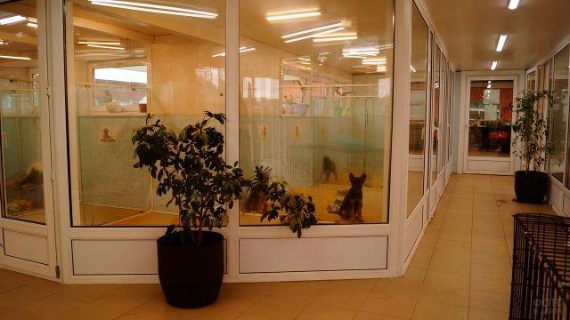 Прозрачные вольеры в здании