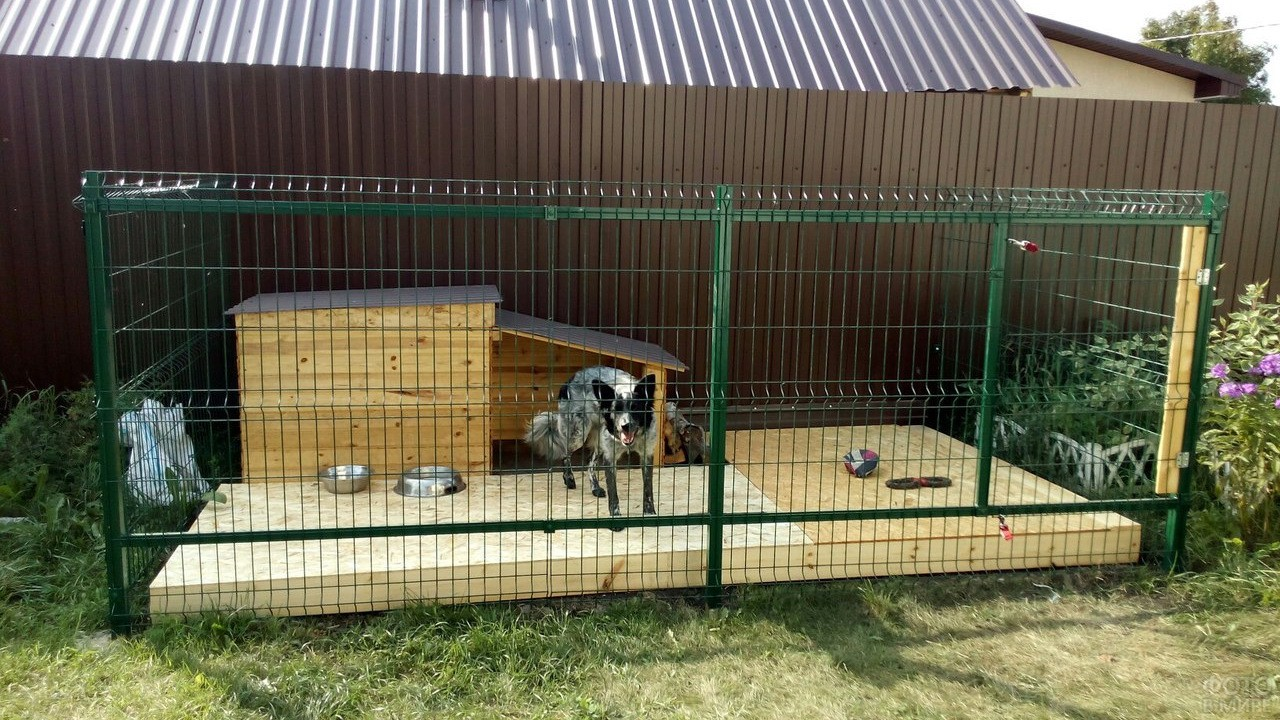 Собака в зелёном загоне с будкой