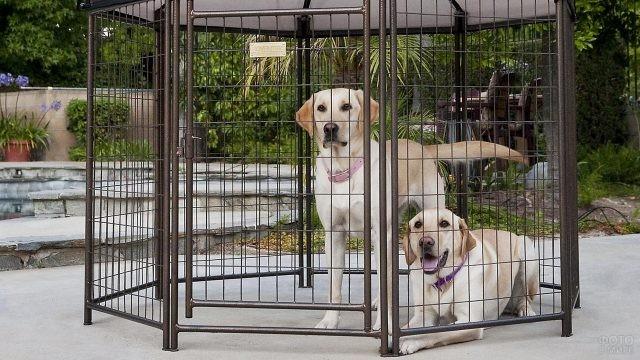 Собаки в маленькой беседке