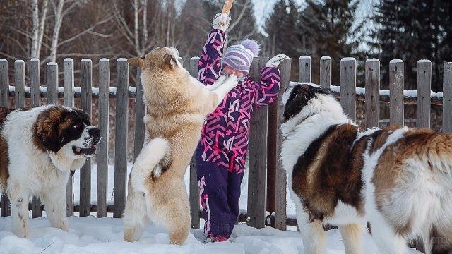 Девочка играет с собаками на снегу возле забора