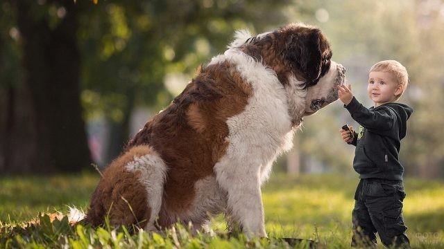 Мальчик гладит большую собаку на природе