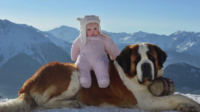 Младенец сидит на лежащем сенбернаре в горах