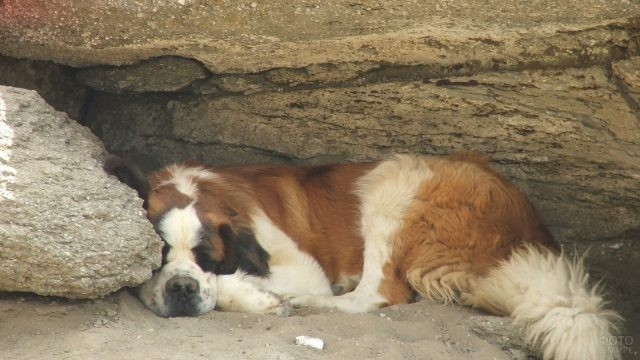 Породистая собака спит на песке в пещере