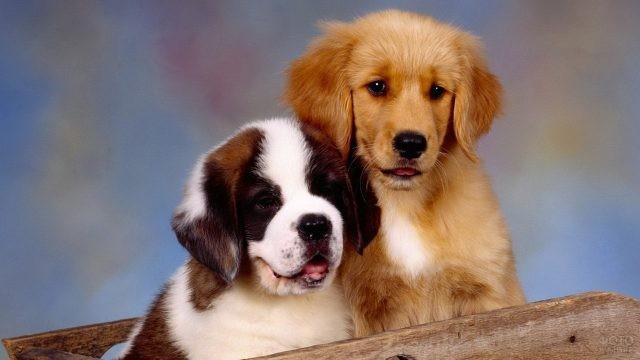 Разнопородистые щенки в деревянной ёмкости