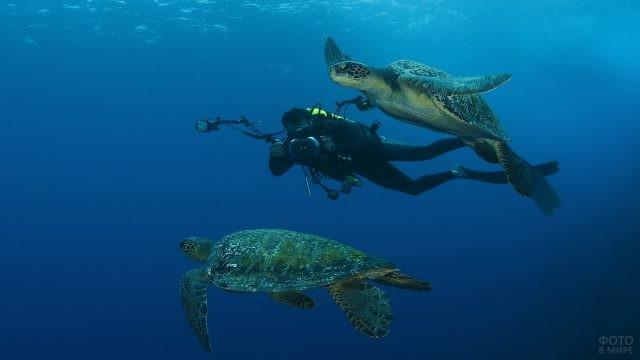 Аквалангист фотографирует морских черепах под водой