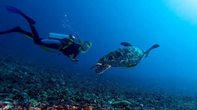 Аквалангист плывёт с черепахой
