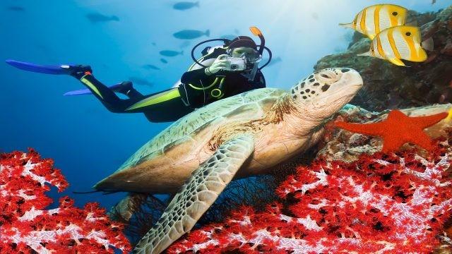 Дайвер фотографирует обитателей подводного мира