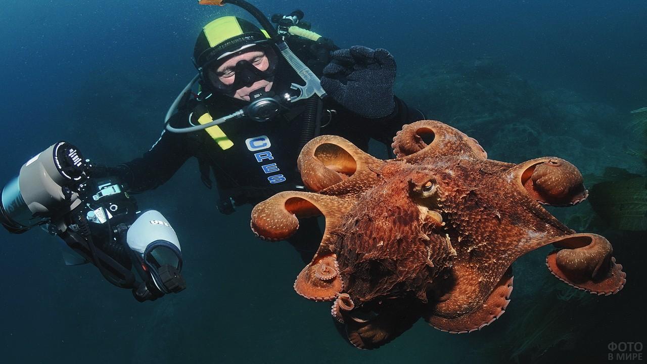 Дайвер и большой осьминог