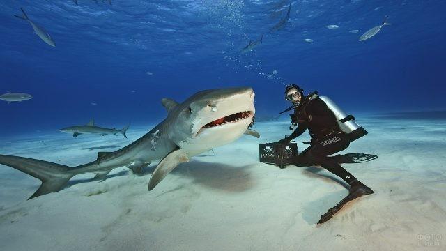 Дайвер и леопардовая акула
