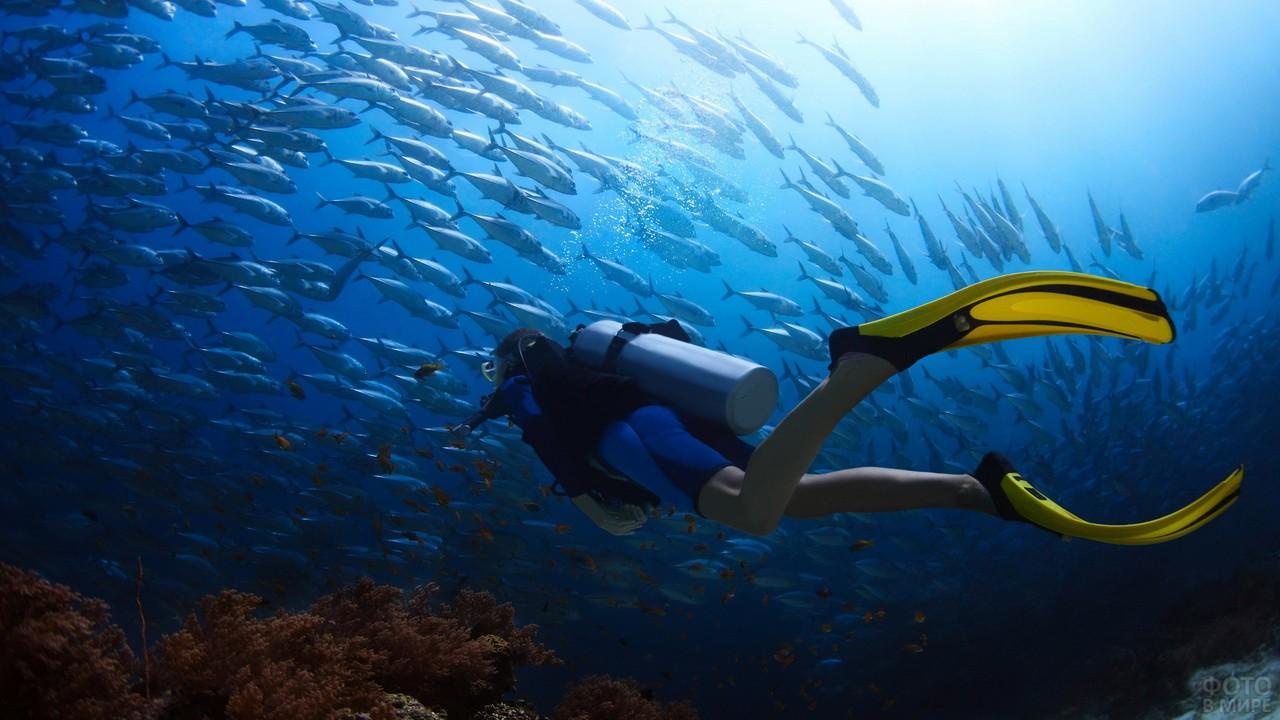Дайвер и стая рыб