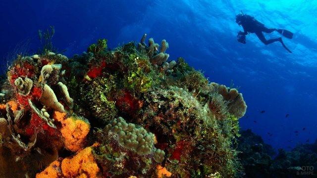 Дайвер плывёт над кораллами