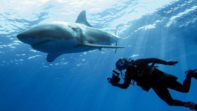 Дайвер с белой акулой