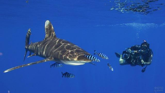 Дайвер снимает видео акулы под водой