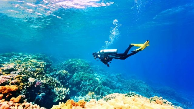 Дайвер среди коралловых рифов