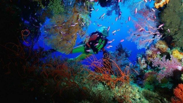 Дайвер в коралловых рифах