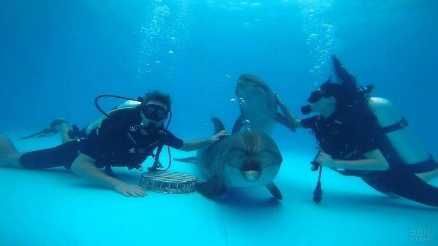 Дайверы и дельфины под водой