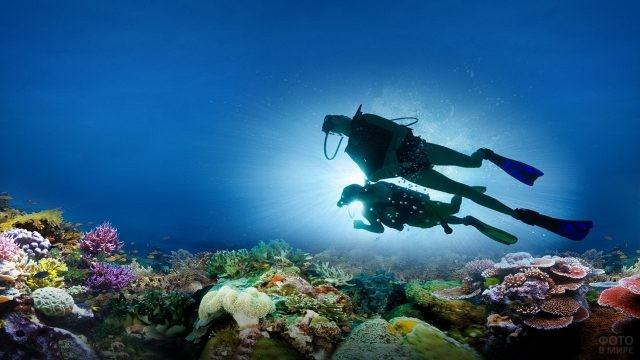 Дайверы и подводный мир