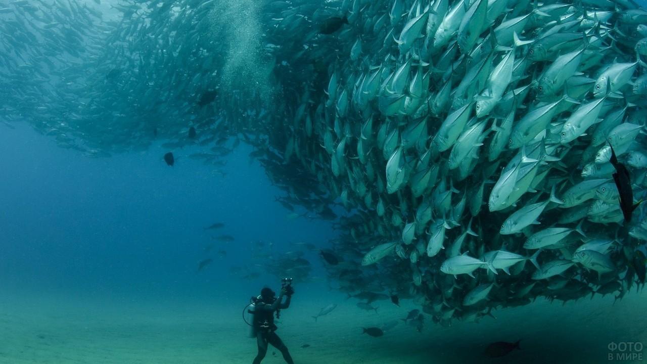 Косяк рыб плывёт на дайвера