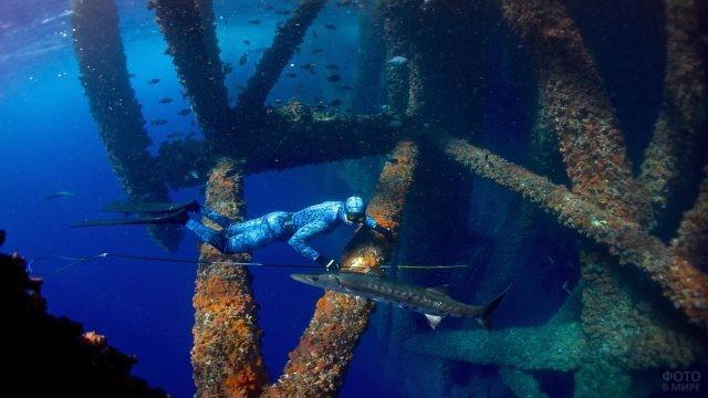 Подводная охота дайвера