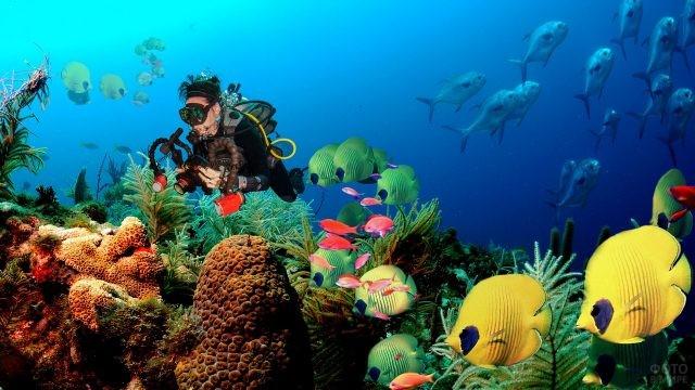 Подводный мир удивительной красоты