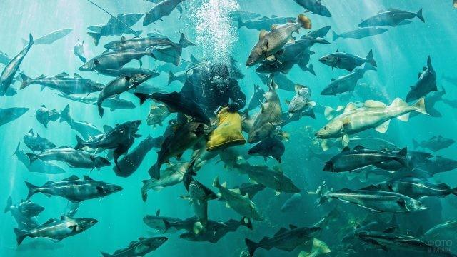 Стаи рыб под водой