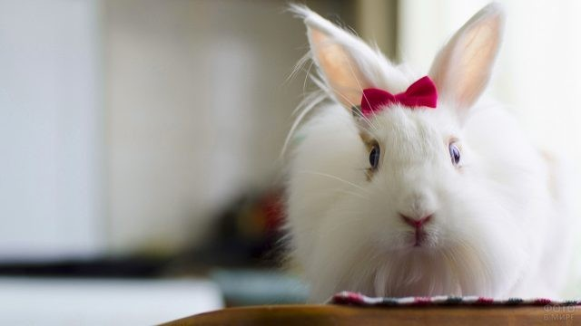 Белая крольчиха с красным бантиком