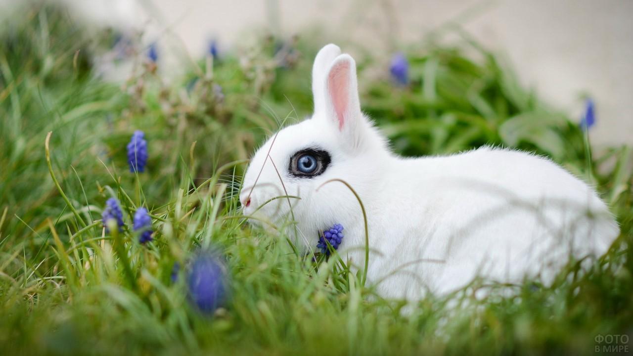 Белый хотот с чёрной окантовкой глаз