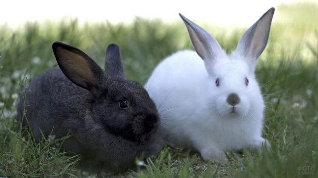 Чёрный и белый кролики сидят на траве
