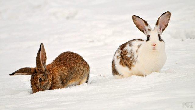 Два кролика на снегу
