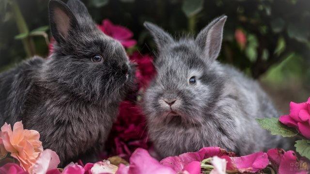 Два пушистых кролика сидят на цветах