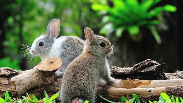 Крольчата сидят на бревнах