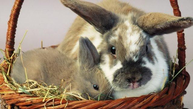 Крольчиха и крольчонок сидят в корзинке