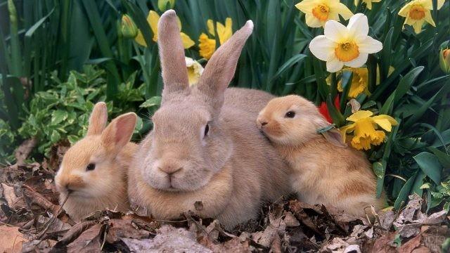 Крольчиха с маленькими крольчатами